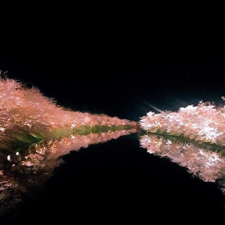 『西堀は相変わらずカメラマンが多かった。 今日は無風だったので水面に桜が写って本当に綺麗でした🌟 上手く写せないのがもどかしい。夜桜写すときだけはスマホのカメラに限界を感じます😅』NovemberJoeさんが投稿した弘前公園,弘前公園桜祭り,さくら 桜 サクラ,今日のお花,『桜』コンテストの画像です。 (2017月4月24日)