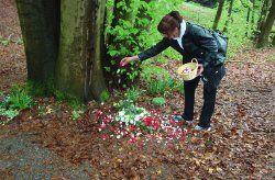 Waldbestattung bei Bonn im Begräbniswald Eitorf | Anternia Bestattungen