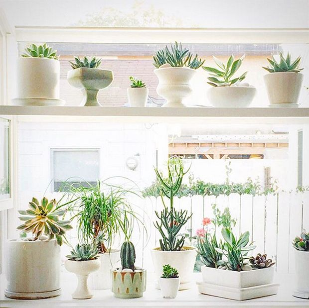 Garden Window filled with Succulents in White pots