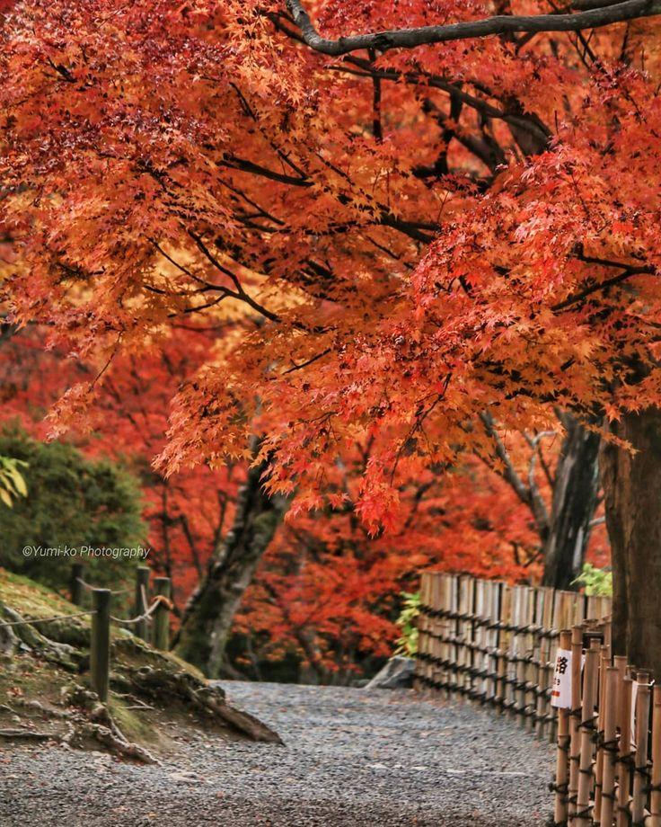 独り占め💛 . 予定になかったけど急遽行った東福寺。 団体さんやたくさんの外国人でごった返してましたが、挫けずに頑張りました😂💦(ほとんど外国人だったような…😅) . 閉門時間ギリギリまで粘って無人写真量産💪もちろんご迷惑にならないよう、時間内に即撤収しました🏃💨😊 . . Location: Kyoto, Japan . #東福寺 #紅葉 #寺社仏閣 #京都 #そうだ京都行こう #日本に京都があってよかった #ファインダー越しの私の世界 #Kyoto #autumn #autumnleaves #ig_today #ig_dynamic . #yumikoの京さんぽ