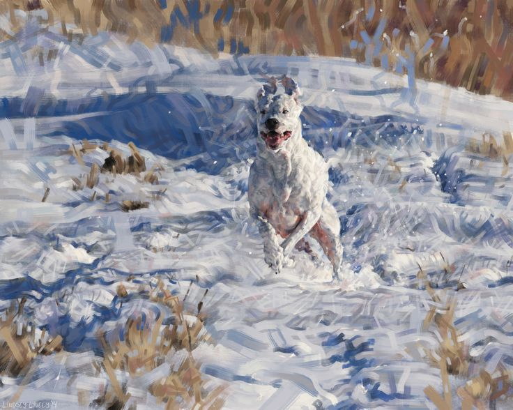Digital painting.  Illustration of a white dog running through the snow by Lindsey Lively.
