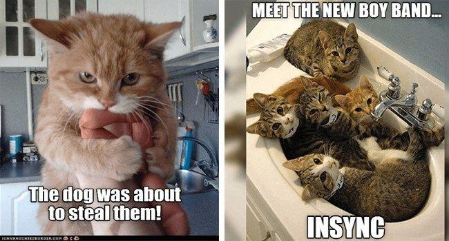 Top 25 Memes Of The Week Cheezburger Users Edition 94 Cat Memes Funny Animal Memes Dog Memes