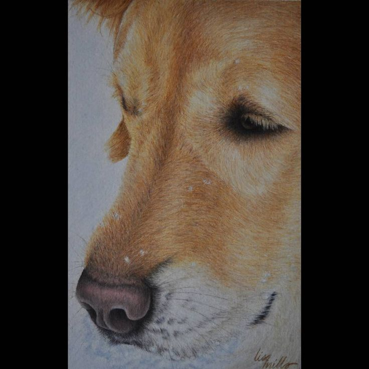 Colored Pencil Society Of America Snow Dog By