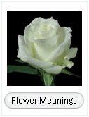 Kinds of Flowers; Flower info - including names of flowers, their meanings, pictures of common flowers used in weddings and more.  Easy DIY flower arranging lessons.