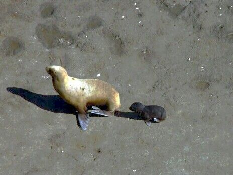 Sea lions, Peninsula Valdez.