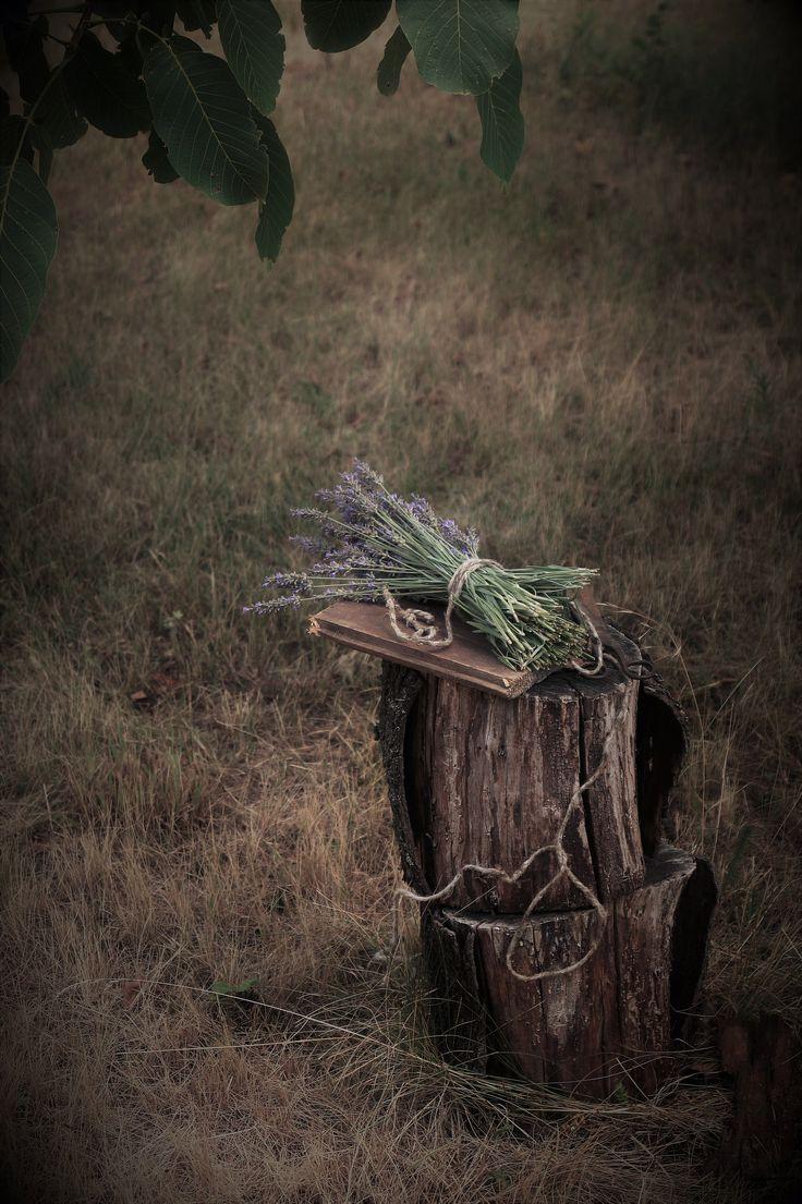 Photography / lavender
