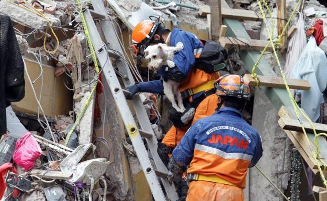 Alumnos de Veterinaria de la UNAM curaron a 100 perros heridos por sismo - El Universal