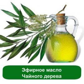Эфирное масло чайного дерева. Свойства эфирного масла чайного дерева, в косметике. Применение и действие масла чайного дерева.