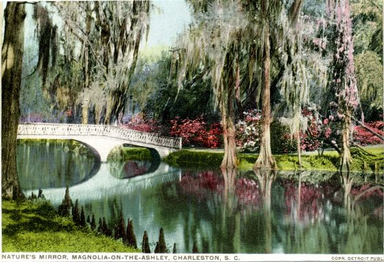 A beautiful walk in Magnolia Plantation and Gardens in Charleston, South Carolina, looks just like this!