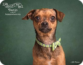 1000 Ideas About Pug Chihuahua Mix On Pinterest Chugs