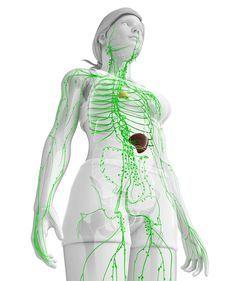 Das Lymphsystem hat einen bedeutenden Einfluss auf unsere Gesundheit. Diese drei Dinge sollten wir jeden Tag tun, um es zu trainieren.