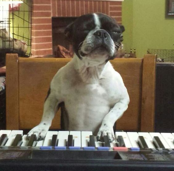 I shall play you the song of my people ❤❤❤ from: http://bostonterrierworld.com/i-shall-play-you-the-song-of-my-people/