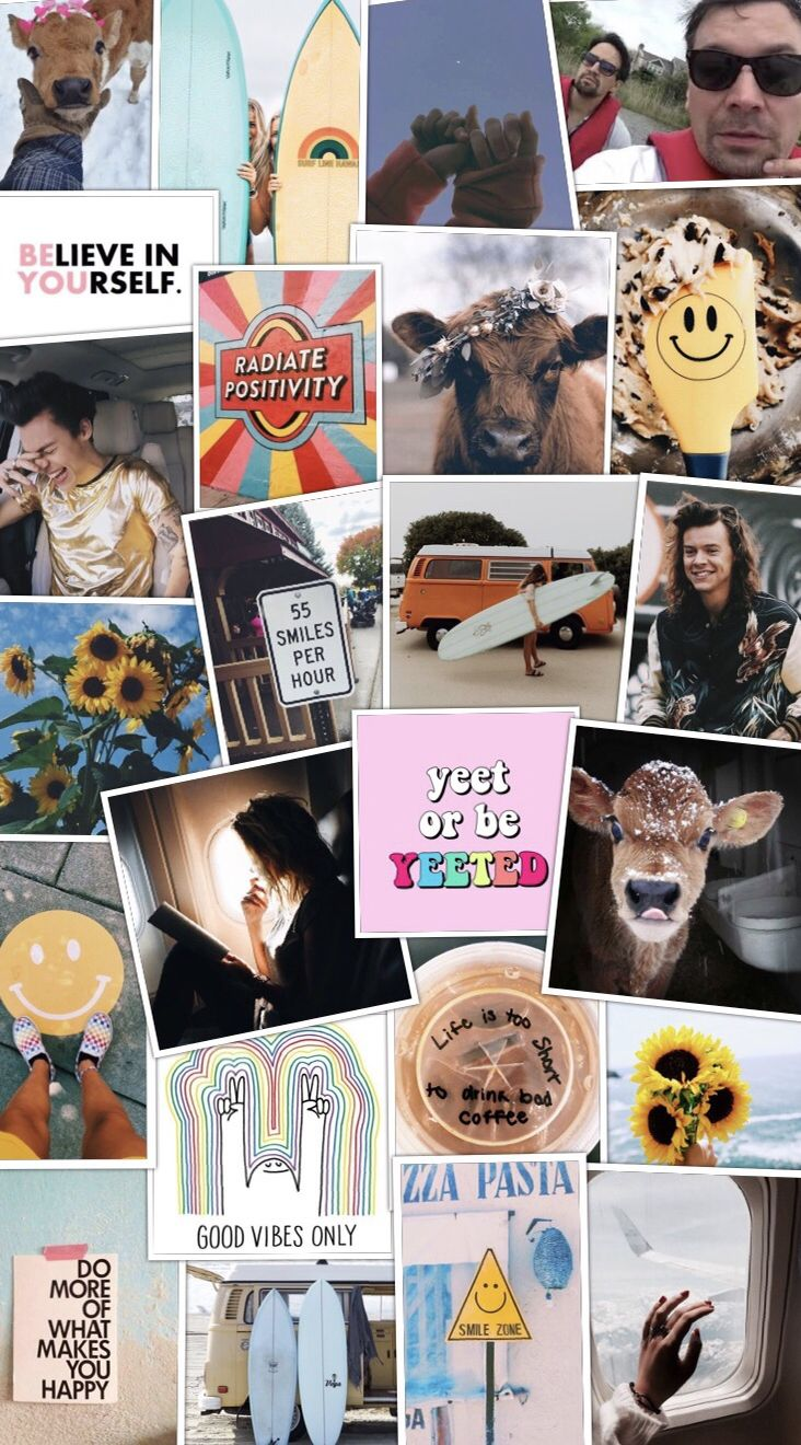 harry styles, cows, yellow & happiness )) Are you happy