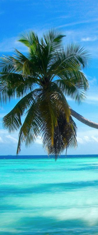 Pic of the Day...Tropical Dream -------------- #beach #tropics #tropical #palmtrees #beaches