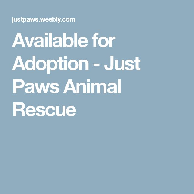 Available for Adoption - Just Paws Animal Rescue