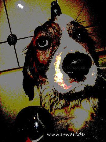 Tiere, Hund, Bretone, Berner Senner, baden, Badewanne, Dog, Puppy, Hundefutter, Hundeschule, Hagen,  NRW,  Welpen,  Hundewelpen, Hundeerzeihung, Fährten legen, MW art Marion Waschk, MAts