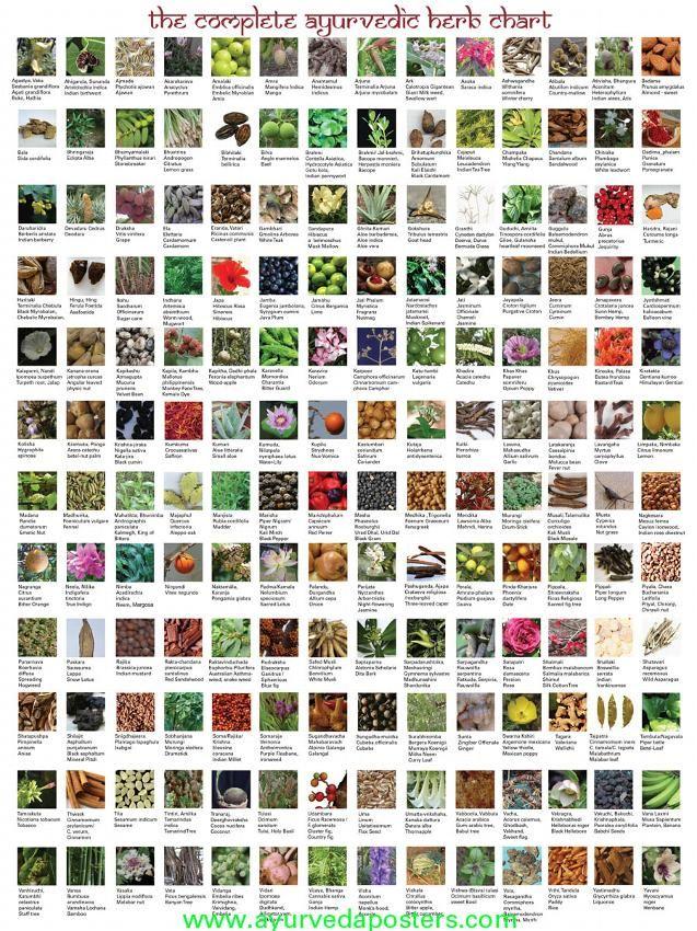 Ayurvedic Herb Chart Ayurveda Pinterest Charts