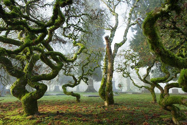 Japanese Maple / Portland, Oregon: Moss Covers, Japanese Maple Trees, Petrified Snakes, Japan Maple, Japan Gardens, Snakes Ballet, Cool Trees, Portland Oregon, Fairies Tales