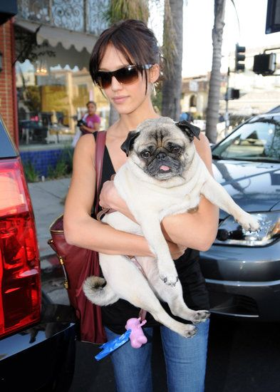 Celebrity Dog Lovers Photo 37 - Jessica Alba with Sid the pug