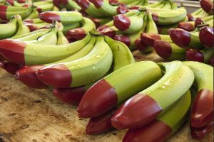 What is a red tipped banana?  Follow this pin to find out.