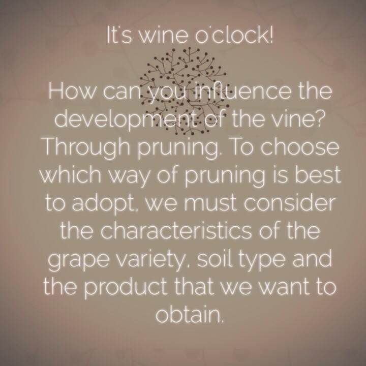 How can you influence the development of the vine?  #wineoclock #winelovers #wine #wein #vinho San Marzano Cantine