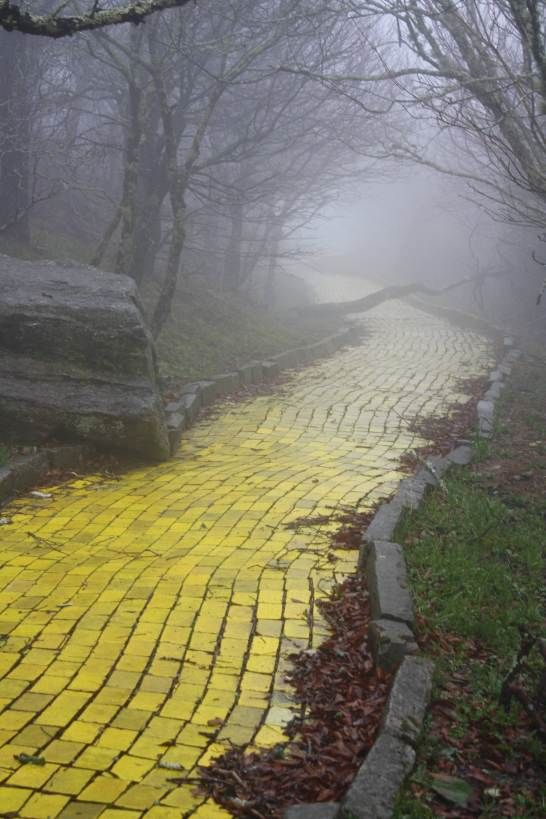 "The yellow brick road in the abandoned ""Land of Oz"" theme park in North Carolina"