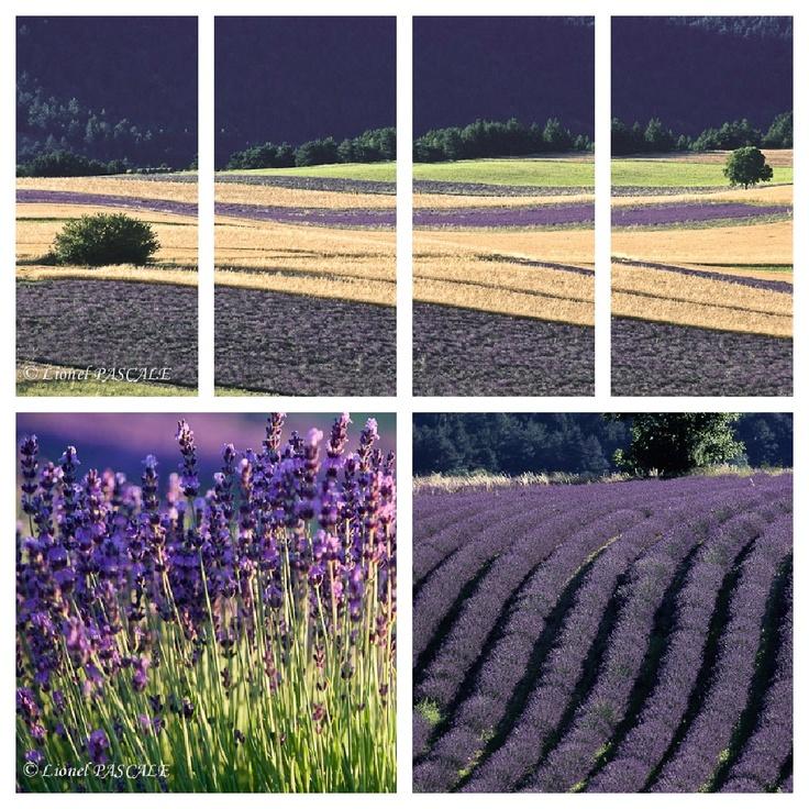 Drôme Provence drome lavande http://www.bien-etre-drome.com/