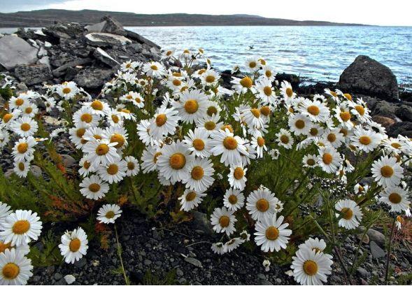 Pozitivnap - A pozitív Hírek oldala - Miért ismeri minden izlandi a Kis kece lányomat? Hát ezért!