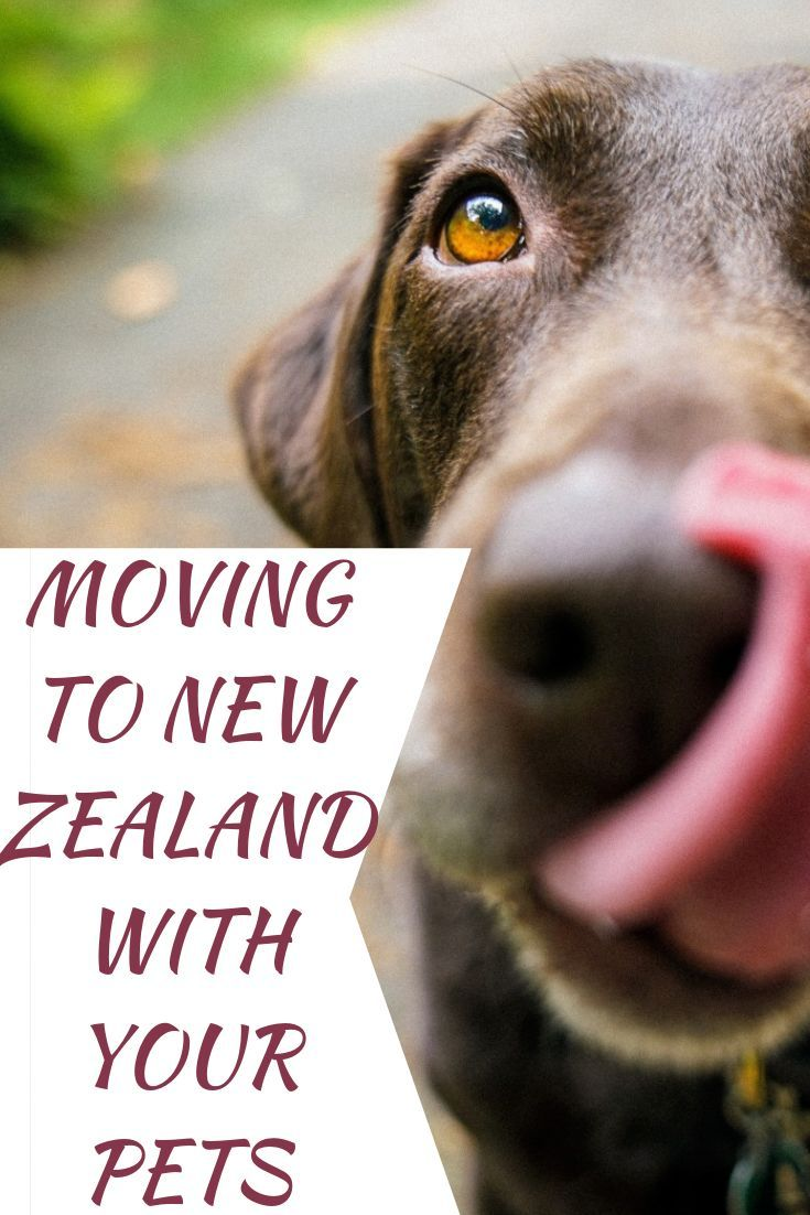 This Quick List Of Pet Travel Essentials And Airplane Tips Will Help You Minimize The Stress Of Moving Abroad With Pets Air Tra Traveling Creatives In 2019 Pet Travel Travel