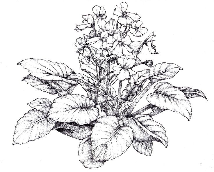 black and white drawing violet flower - Google Search ...