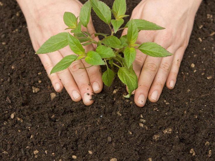 Simples et plantes médicinales : une pharmacie dans son jardin !