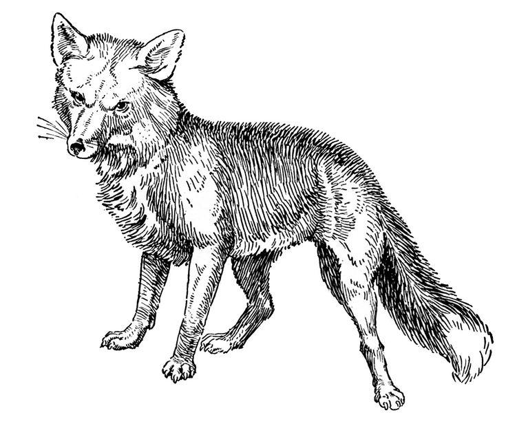 Vintage Animal Clip Art Fox Drawings Homemade Butter