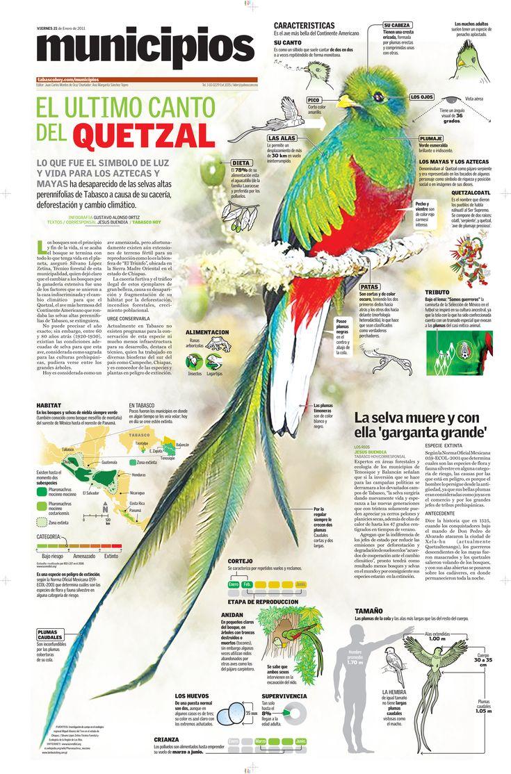 El Quetzal, hermosa ave  de gran valor para los aztecas y mayas  con sus plumas esta formado en su mayoria el penacho de moctezuma y  en sus tiempos sus plumajes eran usados como moneda por el gran valor con el que se le consideraba.