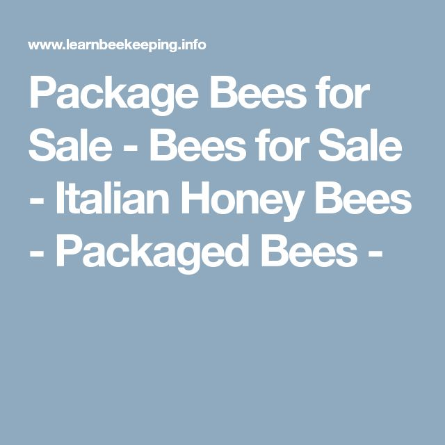 Package Bees for Sale - Bees for Sale - Italian Honey Bees - Packaged Bees -