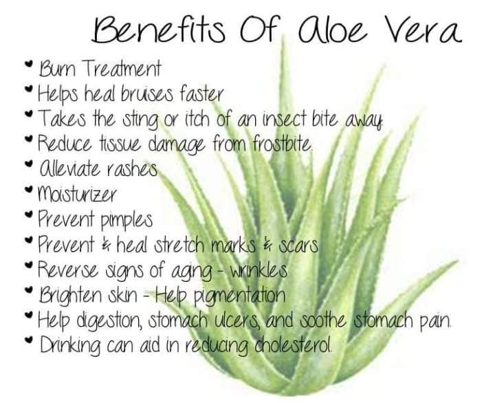 The Many Benefits Of Using Aloe Checkout These Fantastic Products Http Aloette Com Reginat Aloe Vera Uses Aloe Vera For Skin Aloe Vera Benefits