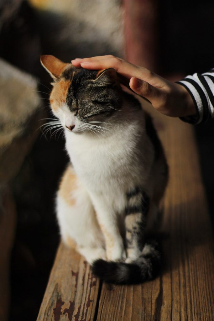 Weird Cat Behavior Biting The Hand That Pets You Cat Behavior Beautiful Cats Pictures Cat Photography