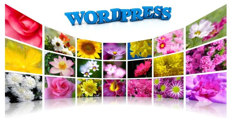 Best WordPress Gallery Plugin #plugin