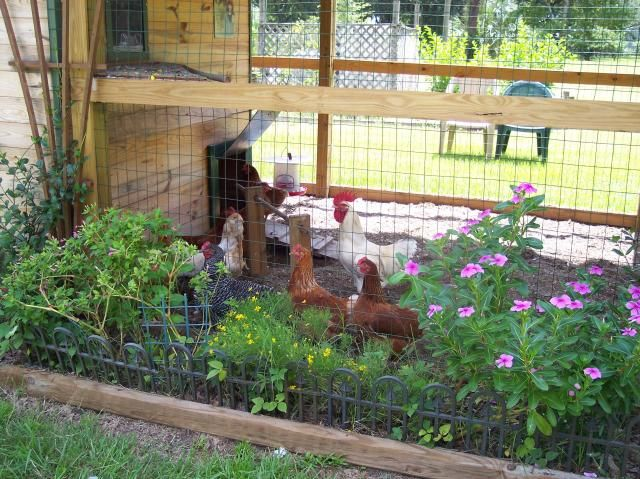 Best Coops Images On Pinterest Backyard Chickens Chicken - Chicken co op with flowers