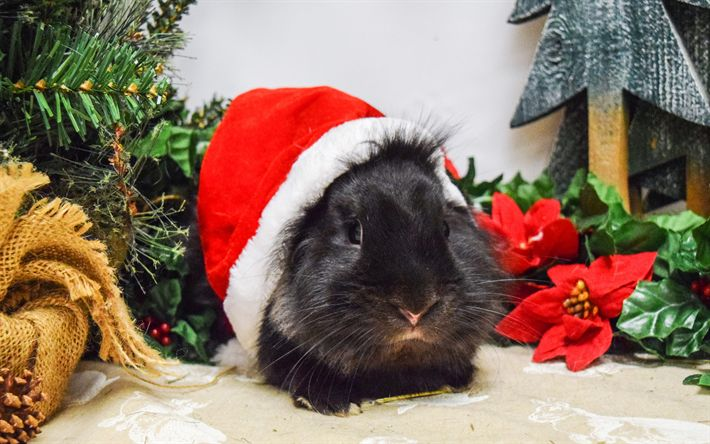 Download wallpapers black guinea pig, Christmas, New Year, red hat, Santa Claus, xmas