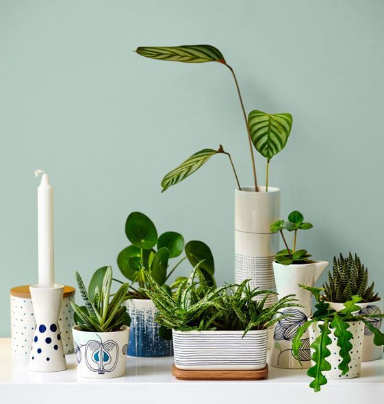 Skønne nyheder fra Helbak. De fine sukkulenter passer for eksempel perfekt til Helbaks enkle formsprog, hvor både krus, kander og smørbokse fungerer rigtig godt som potteskjulere. #inspirationdk #BotanicLiving #planter #Indretmedplanter