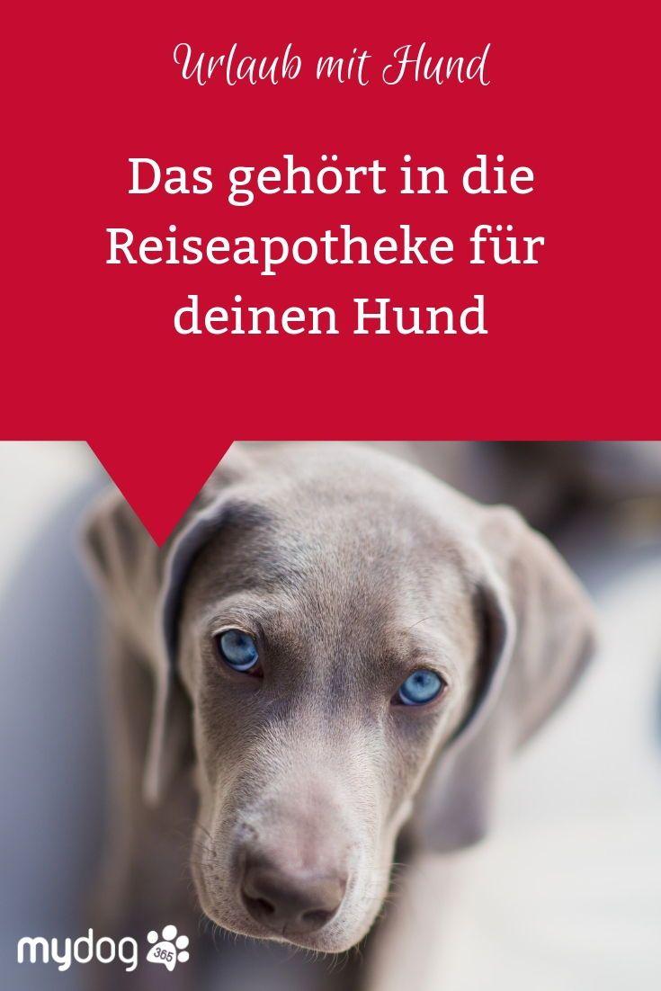 Eine Reiseapotheke Ist Das A Und O Um Fur Den Notfall Optimal Vorbereitet Zu Sein Also Ruhig Blut Wenn Deine Reiseapotheke F Hundegesundheit Hunde Apotheke
