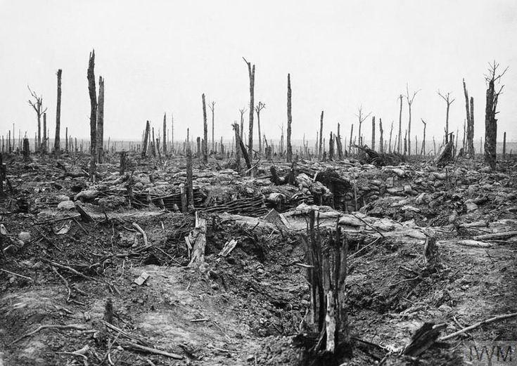 11 June 1917; General view showing the destruction of Oosttaverne Wood, including the trenches taken by the British during the Battle of Messines Ridge. ©IWM Q 2304