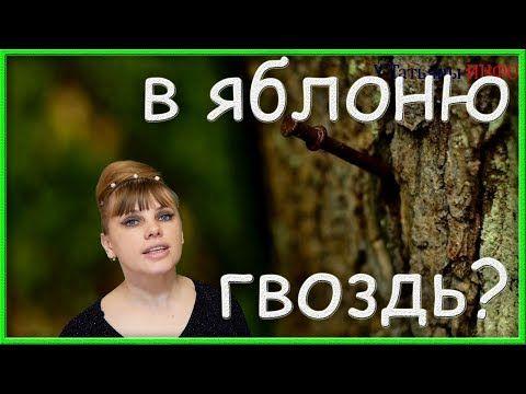(285) Забей в ЯБЛОНЮ гвоздь... Результат тебя приятно УДИВИТ!!! - YouTube
