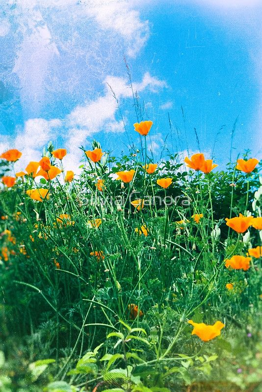 Thinking of you - Orange poppies by Silvia Ganora - #prints #poppies #nature #redbubble #flowers #spring