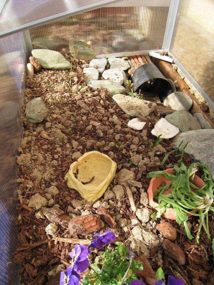 1000 id es sur le th me enclos pour tortue sur pinterest l 39 habitat de la tortue vivarium - Plantes pour terrarium ferme ...