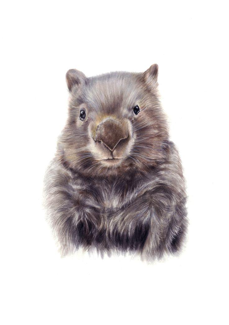 19 Best Wombats Images On Pinterest Pets Australia And
