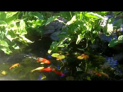 17 Best Images About Koi Ponds On Pinterest Beach Landscape Backyard Waterfalls And Waterfall