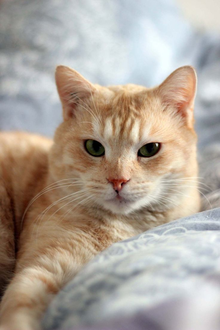 this kitty reminds me of my moms kitty: Tigger