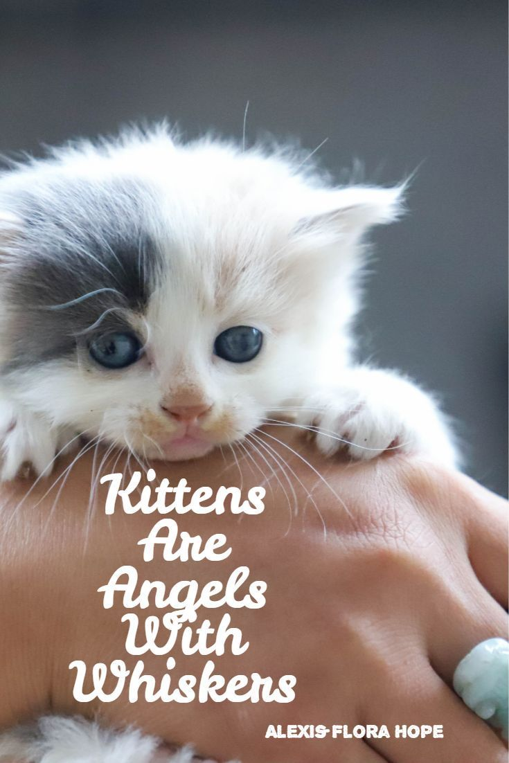 Kittens Are Angels With Whiskers Kitten Quotes Animals Kittens Cutest