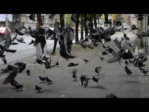 Comedy – funny – whats app – facebook – Pigeon, birds - video 999 -  #bird #birding #bird_watchers_daily #animal #birdwatching #pets #nature_seekers #birdlovers Dog Training – The Perfect Pooch System!  Click HERE! Comedy – funny – whats app – facebook – ALL MIX – video 4 Crazy, Comedy, funny, comedy video, funny video, facebook, whats app, twitter,... - #Birds